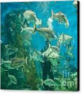 Cool Aquarium Canvas Print by Ray Warren