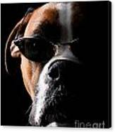 Cool Dog Canvas Print by Jt PhotoDesign