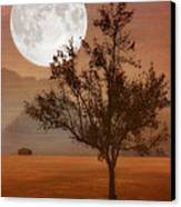 Copper Tree Canvas Print by Tom York Images