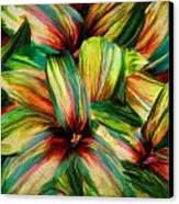 Cordyline Canvas Print
