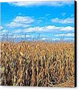 Corn Field Canvas Print by Peter Jackson