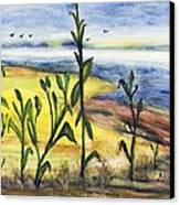 Corn Field By The Sea Canvas Print by Anais DelaVega