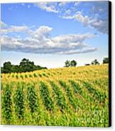 Corn Field Canvas Print by Elena Elisseeva