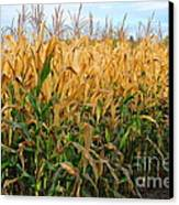 Corn Harvest Canvas Print by Terri Gostola