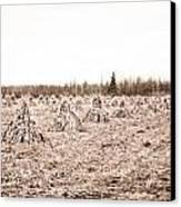 Corn Shocks Canvas Print by Maggy Marsh