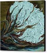 Cotton Boll On Wood Canvas Print by Eloise Schneider