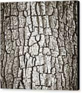 Cottonwood Bark 1 Canvas Print by Marilyn Hunt