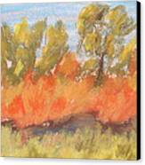 Cottonwood Grove Canvas Print