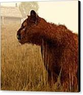 Cougar In A Field Canvas Print by Daniel Eskridge