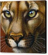 Cougar October 2011 Canvas Print