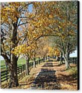 Country Lane Canvas Print by Roger Potts