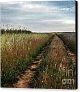 Countryside Tracks Canvas Print