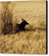 Cow Elk Canvas Print by Johanna Elik