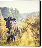 Cow Hiding In The Weeds Canvas Print by Karen Broemmelsick