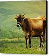 Cow In The Field Canvas Print by Jelena Jovanovic