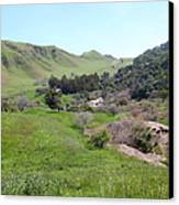 Cows Along The Rolling Hills Landscape Of The Black Diamond Mines In Antioch California 5d22294 Canvas Print