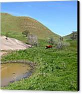Cows Along The Rolling Hills Landscape Of The Black Diamond Mines In Antioch California 5d22304 Canvas Print