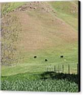 Cows Along The Rolling Hills Landscape Of The Black Diamond Mines In Antioch California 5d22319 Canvas Print by Wingsdomain Art and Photography