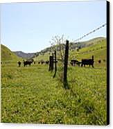 Cows Along The Rolling Hills Landscape Of The Black Diamond Mines In Antioch California 5d22339 Canvas Print by Wingsdomain Art and Photography