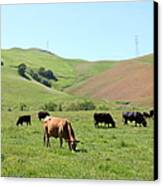 Cows Along The Rolling Hills Landscape Of The Black Diamond Mines In Antioch California 5d22355 Canvas Print by Wingsdomain Art and Photography