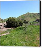 Cows Along The Rolling Landscapes Of The Black Diamond Mines In Antioch California 5d22291 Canvas Print by Wingsdomain Art and Photography