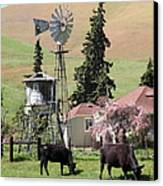 Cows Home On The Ranch At The Black Diamond Mines In Antioch California 5d22354 Canvas Print by Wingsdomain Art and Photography