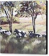 Cows Pasture Canvas Print by Paula Marsh