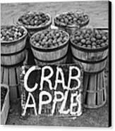 Crab Apples Canvas Print
