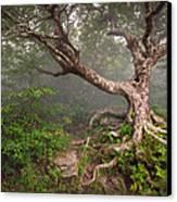 Craggy Gardens Blue Ridge Parkway Asheville Nc - Enduring Craggy Canvas Print by Dave Allen