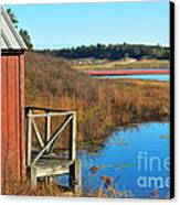 Cranberry Harvest  Canvas Print by Catherine Reusch Daley
