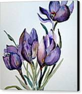 Crocus In April Canvas Print by Mindy Newman