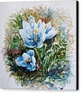 Crocuses Canvas Print by Zaira Dzhaubaeva