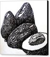 Crosshatched Avocados Canvas Print