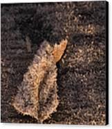Crystal Leaf Canvas Print by Anne Gilbert
