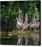 Crystal River Egret Canvas Print by Skip Willits