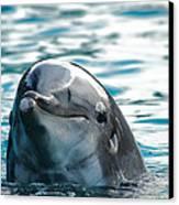 Curious Dolphin Canvas Print