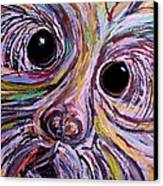 Curious Schnauzer Canvas Print