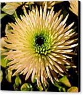 Cut Flowers Canvas Print by Joyce Woodhouse