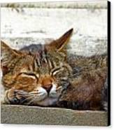 Cute Cat Canvas Print by Borislav Marinic