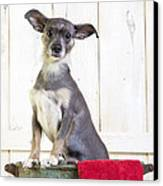 Cute Dog Washtub Canvas Print