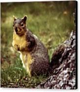 Cute Squirrel Canvas Print by Robert Bales