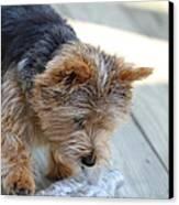 Cutest Dog Ever - Animal - 011313 Canvas Print by DC Photographer