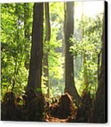 Cypress Forest Canvas Print by Karen Lindquist