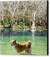 Cypress Spring Pup Canvas Print by Bob Jackson