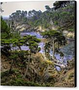 Cypress Canvas Print by Stephen Campbell