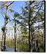 Cypress Swamp Canvas Print by Rudy Umans