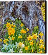 Daffodils And Sculpture Canvas Print