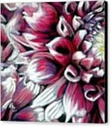 Dahlias In Pastel Canvas Print