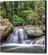 Daintree Rainforest Canvas Print