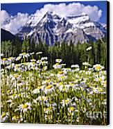 Daisies At Mount Robson Canvas Print by Elena Elisseeva